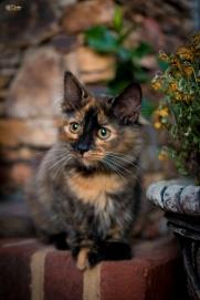 Kitten Portait