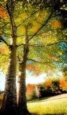 Early Fall in North Carolina